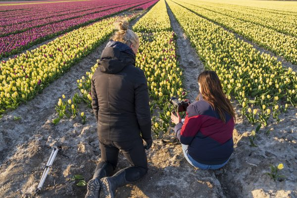 Workshop tulpen fotograferen